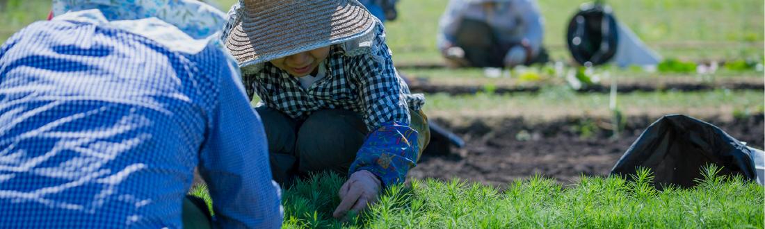 苗木畑での手作業