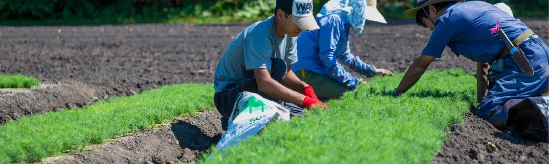 畑での手作業