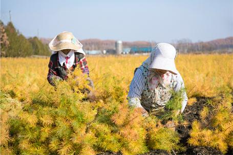 畑での手作業(秋)