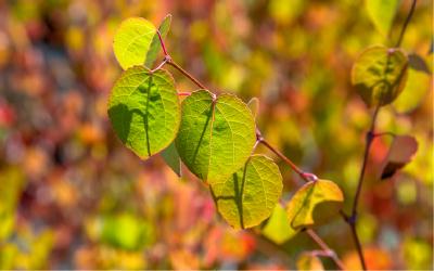 秋の緑化用苗木